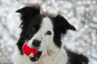 Dog with red ball